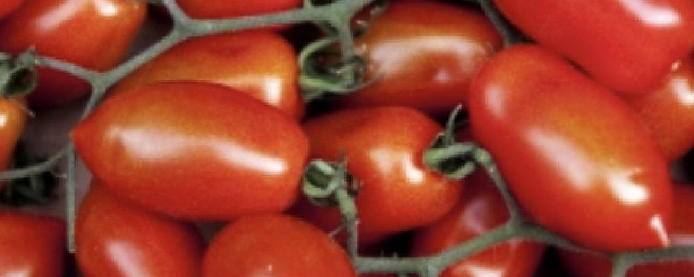 Pomodoro Scicli, varietà pixel